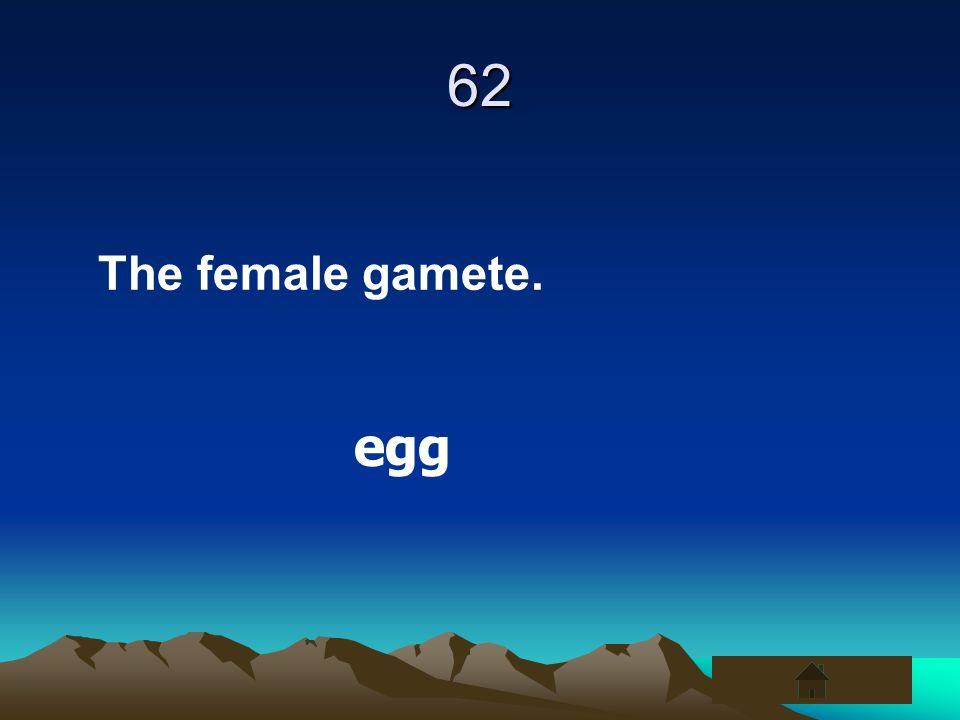 62 The female gamete. egg