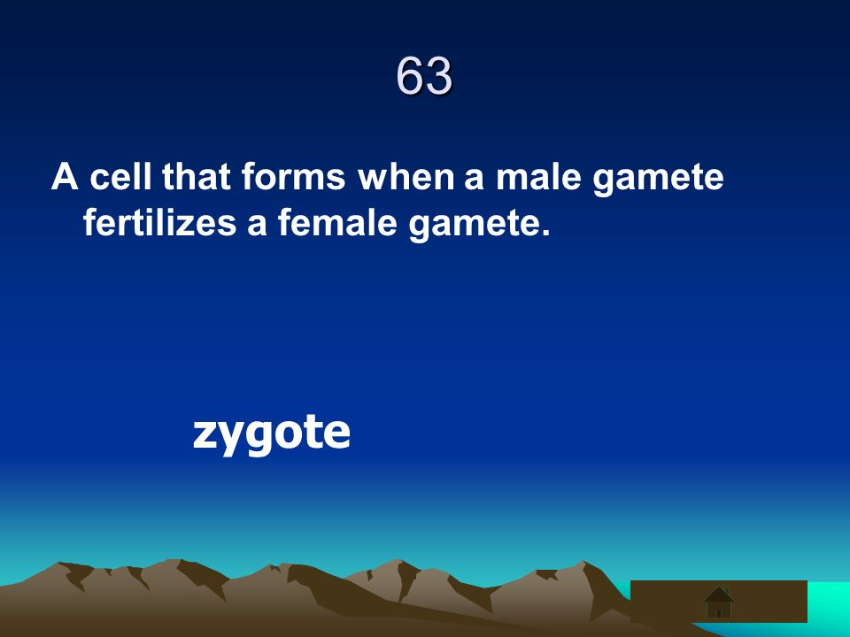 63 A cell that forms when a male gamete fertilizes a female gamete. zygote