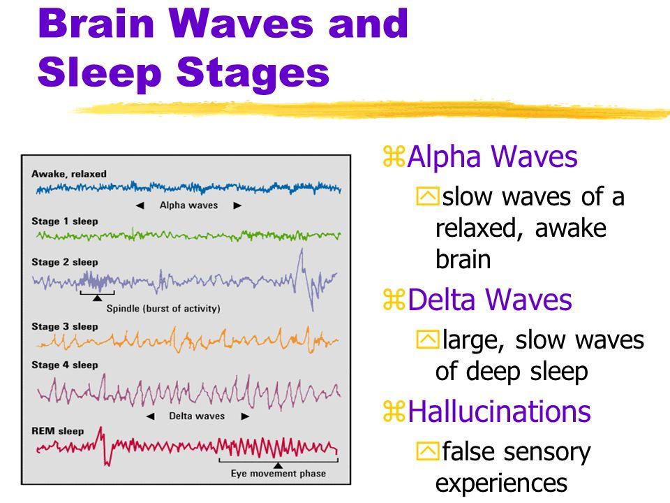Sleep and Dreams zMeasuring sleep activity