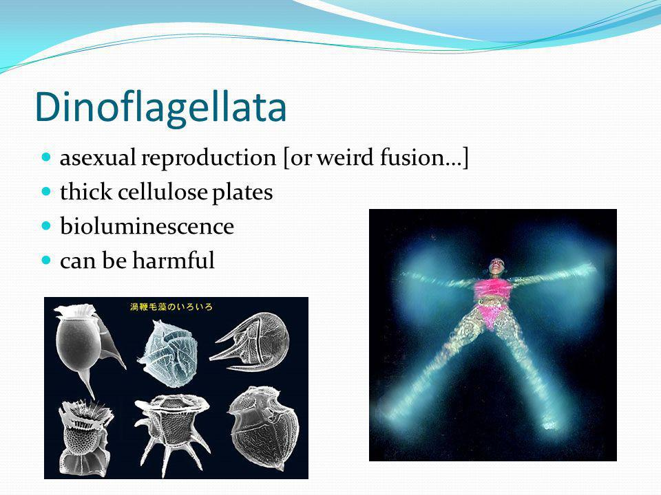 Dinoflagellata asexual reproduction [or weird fusion…] thick cellulose plates bioluminescence can be harmful