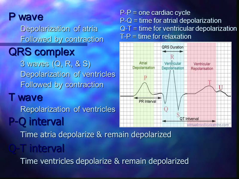 P wave Depolarization of atria Followed by contraction QRS complex 3 waves (Q, R, & S) Depolarization of ventricles Followed by contraction T wave Rep