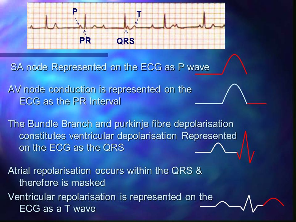 SA node Represented on the ECG as P wave AV node conduction is represented on the ECG as the PR Interval The Bundle Branch and purkinje fibre depolari