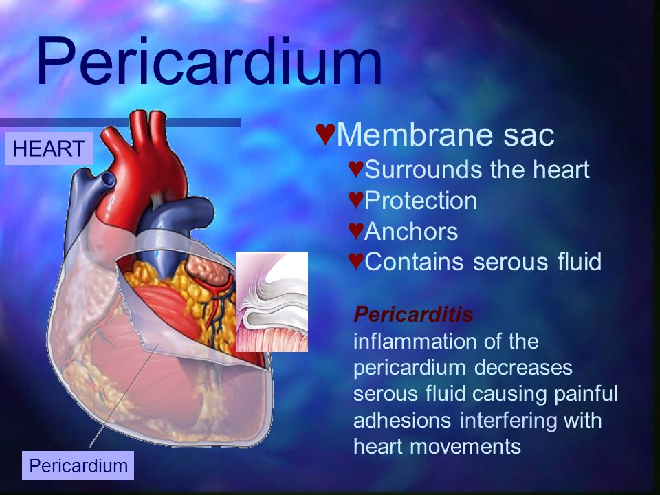 HEART Pericardium Membrane sac Surrounds the heart Protection Anchors Contains serous fluid Pericarditis inflammation of the pericardium decreases ser