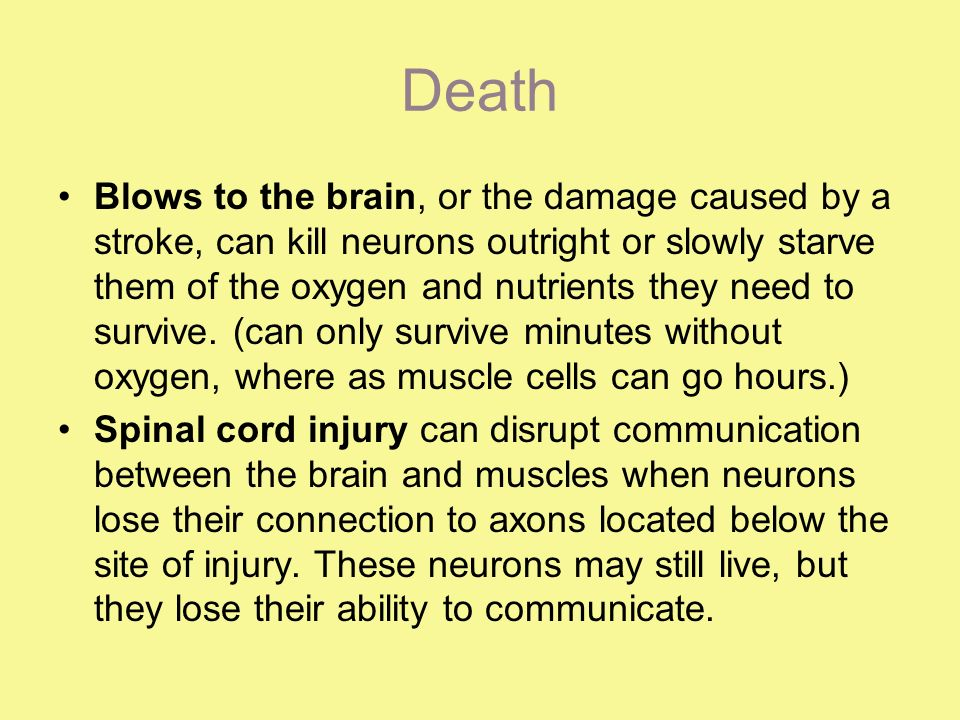 Death Blows to the brain, or the damage caused by a stroke, can kill neurons outright or slowly starve them of the oxygen and nutrients they need to survive.
