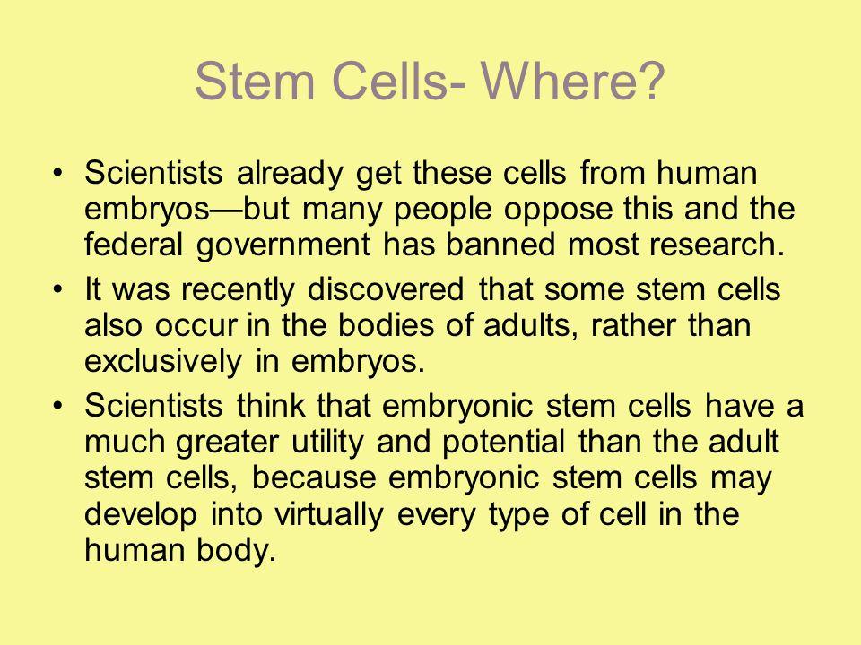 Stem Cells- Where.