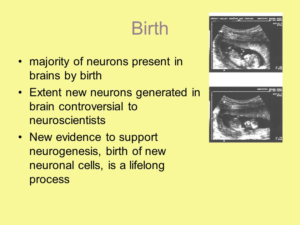 Birth majority of neurons present in brains by birth Extent new neurons generated in brain controversial to neuroscientists New evidence to support neurogenesis, birth of new neuronal cells, is a lifelong process