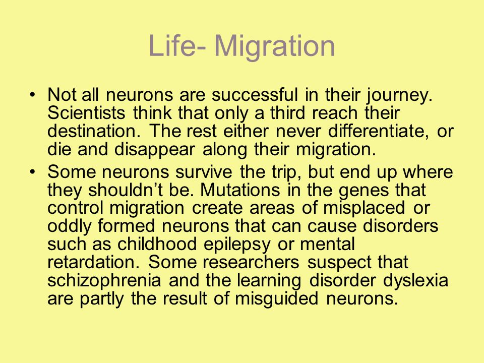 Life- Migration Not all neurons are successful in their journey.
