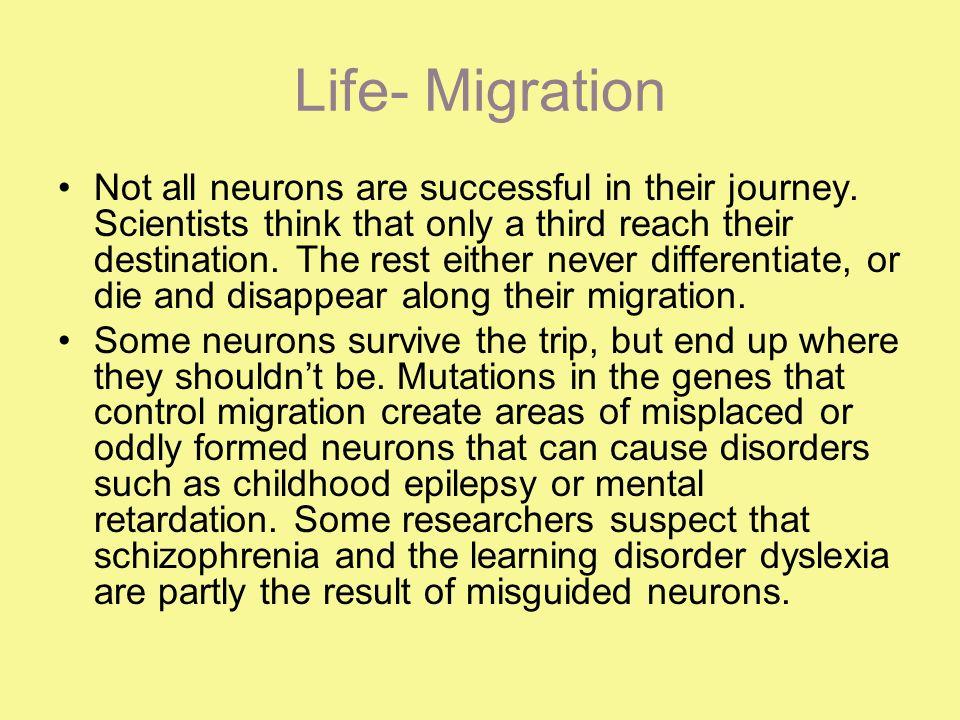 Life- Migration