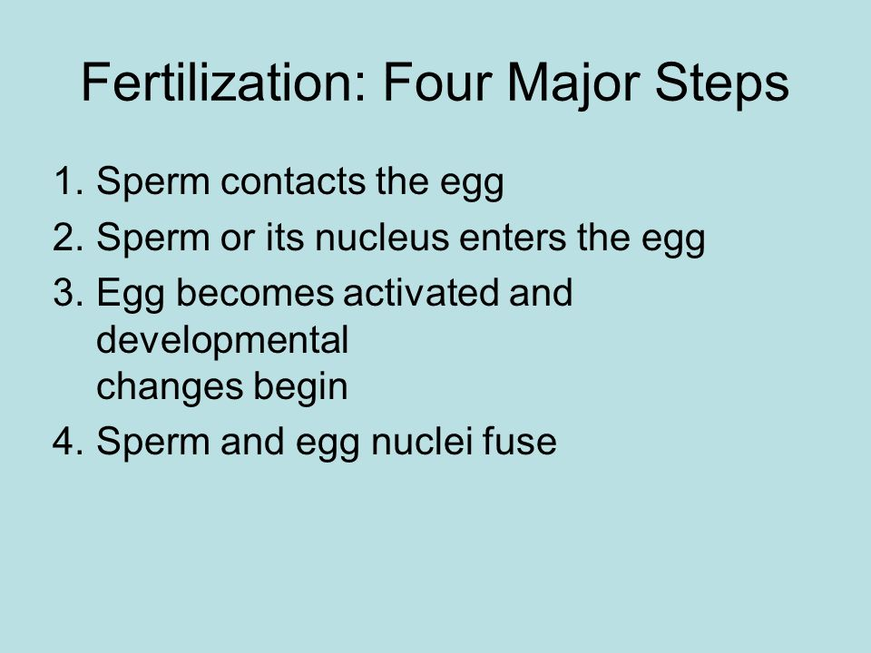 Next it becomes a blastula