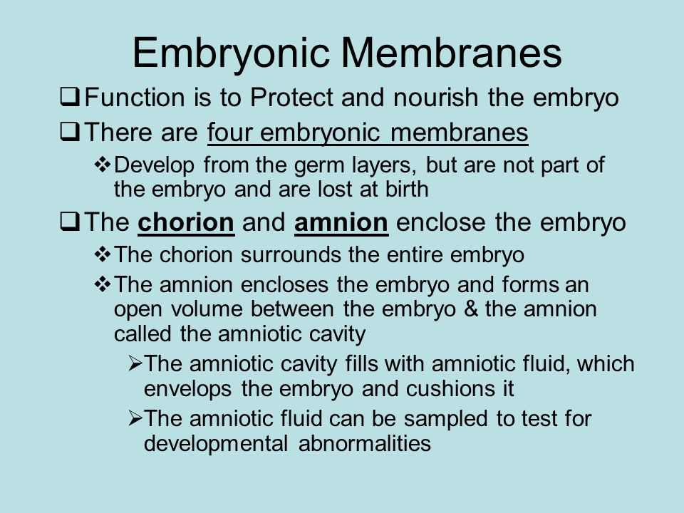 Embryonic Membranes Function is to Protect and nourish the embryo There are four embryonic membranes Develop from the germ layers, but are not part of