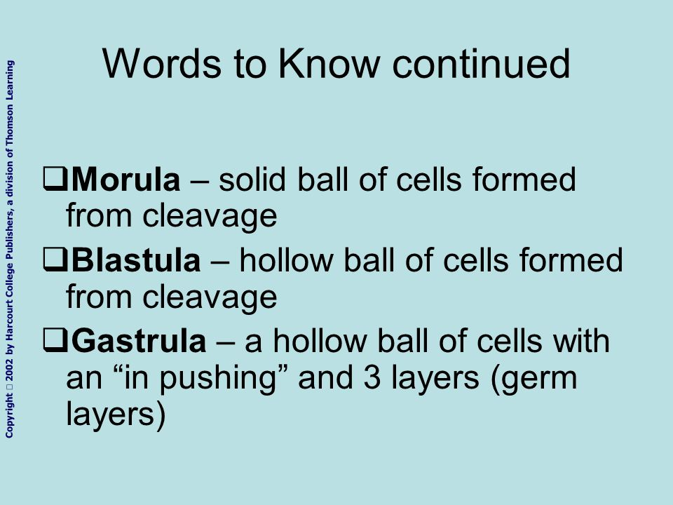 Copyright 2002 by Harcourt College Publishers, a division of Thomson Learning Words to Know continued Morula – solid ball of cells formed from cleavag