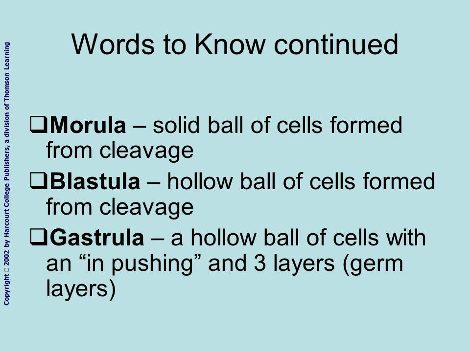 1.Sperm and ovum 2.Zygote (fertilized ovum) 3.2-cell stage 4.4-cell stage 5.Morula 6.Blastula 7.Gastrula