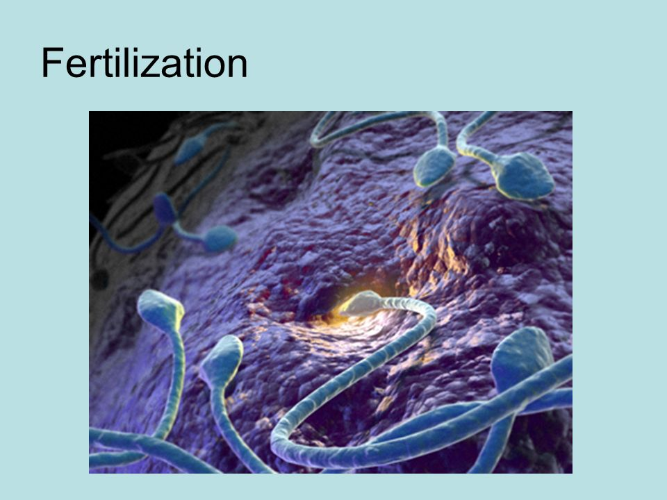 What Happens After Cleavage Begins.Organogenesis is the formation of the organs.