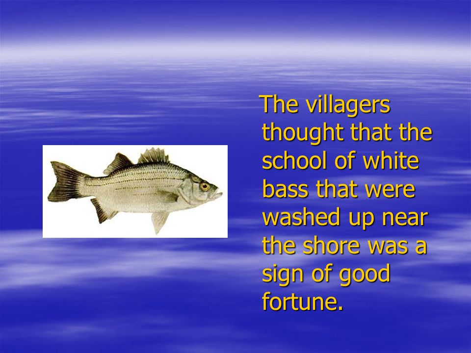 The villagers thought that the school of white bass that were washed up near the shore was a sign of good fortune. The villagers thought that the scho