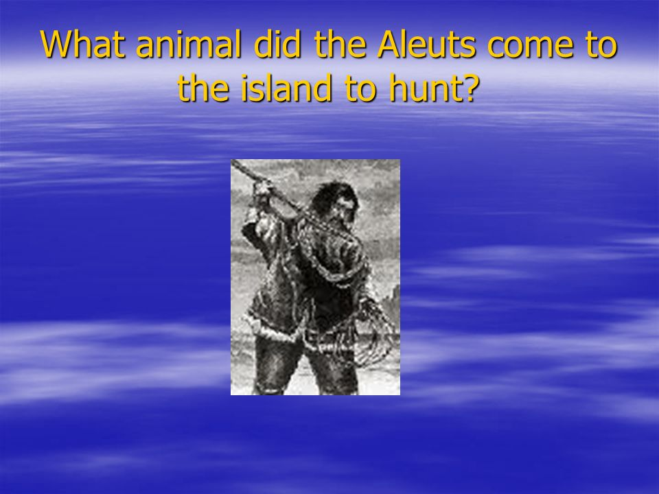 What animal did the Aleuts come to the island to hunt?