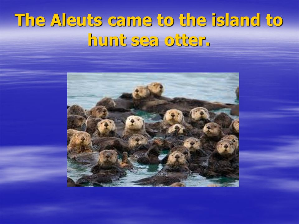 The Aleuts came to the island to hunt sea otter.