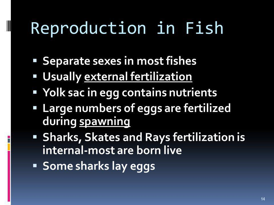 Reproduction in Fish Separate sexes in most fishes Usually external fertilization Yolk sac in egg contains nutrients Large numbers of eggs are fertili