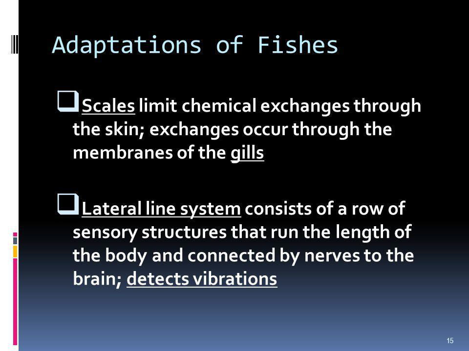Adaptations of Fishes Scales limit chemical exchanges through the skin; exchanges occur through the membranes of the gills Lateral line system consist