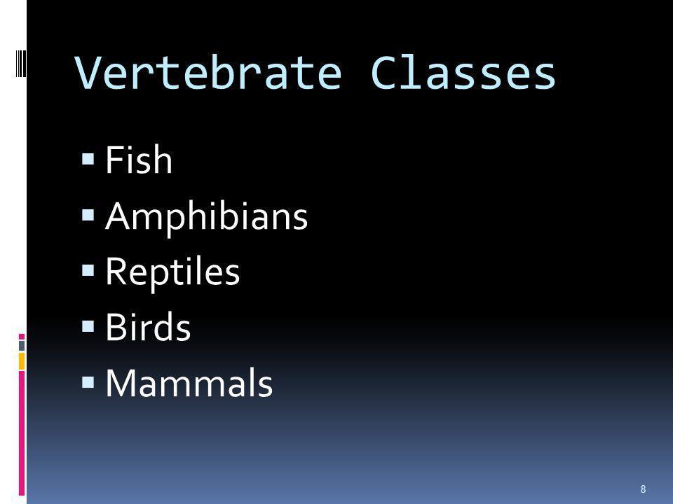 Vertebrate Classes Fish Amphibians Reptiles Birds Mammals 8