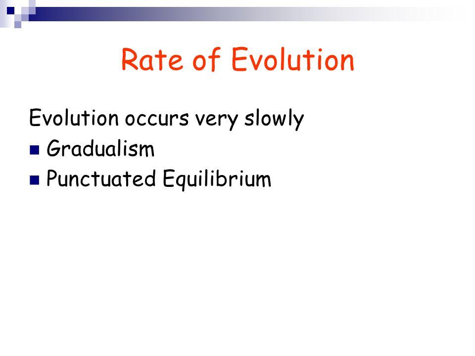 Rate of Evolution Evolution occurs very slowly Gradualism Punctuated Equilibrium
