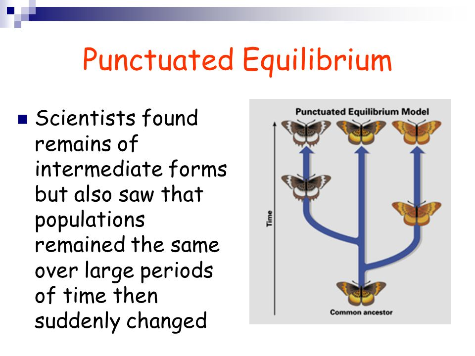 Punctuated Equilibrium Scientists found remains of intermediate forms but also saw that populations remained the same over large periods of time then