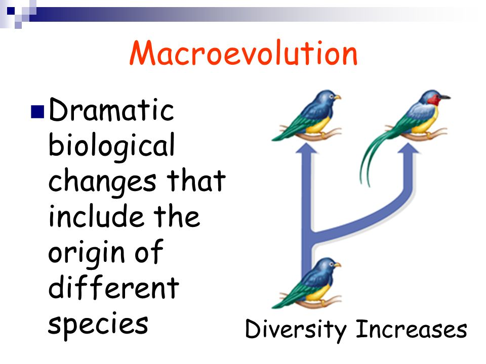 Macroevolution Dramatic biological changes that include the origin of different species Diversity Increases