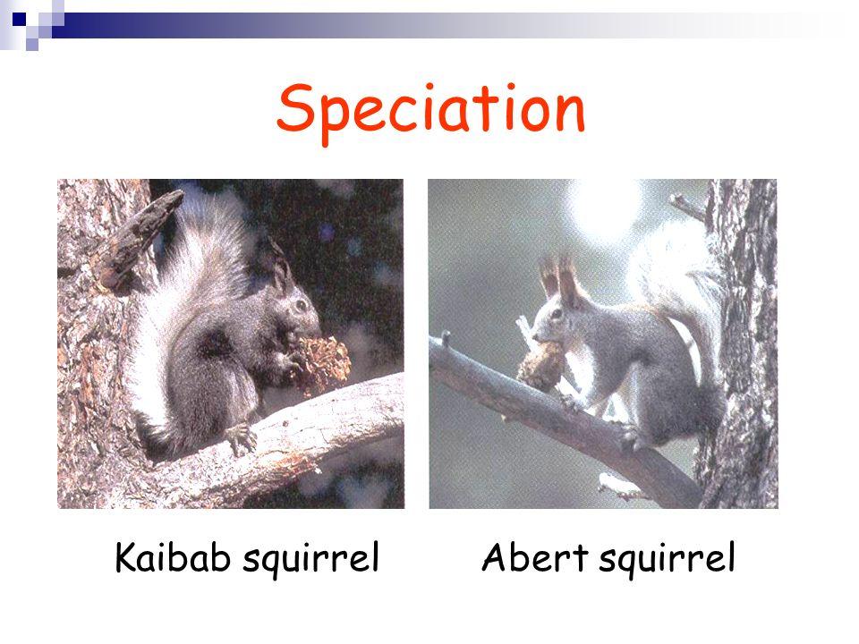 Speciation Kaibab squirrel Abert squirrel