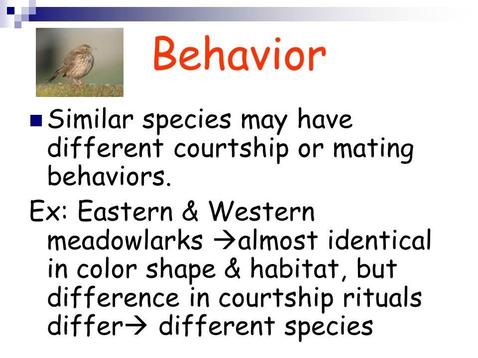 Behavior Similar species may have different courtship or mating behaviors. Ex: Eastern & Western meadowlarks almost identical in color shape & habitat