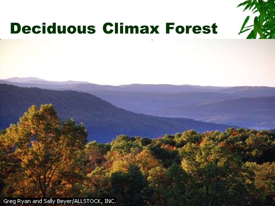 Climax Community: final set of organisms suited to that climate