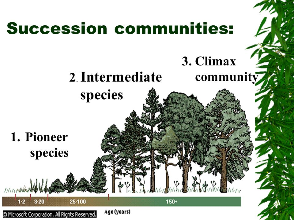 Succession communities: 1.Pioneer species 2. Intermediate species 3. Climax community