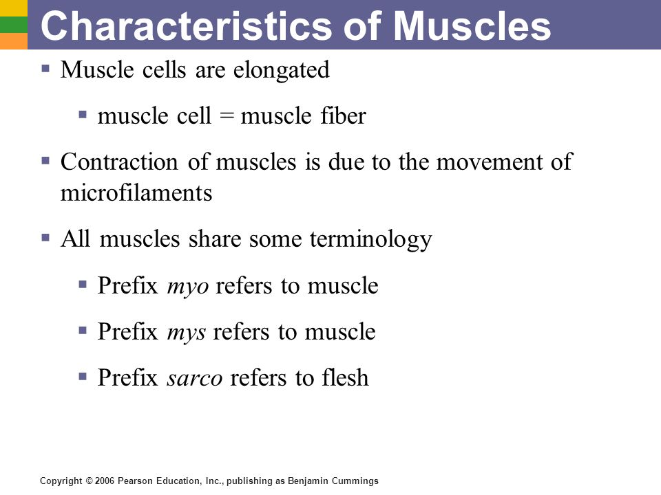 Copyright © 2006 Pearson Education, Inc., publishing as Benjamin Cummings Characteristics of Muscles Muscle cells are elongated muscle cell = muscle f