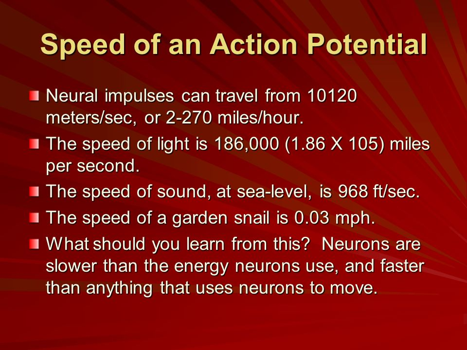 Speed of an Action Potential Neural impulses can travel from 10120 meters/sec, or 2-270 miles/hour. The speed of light is 186,000 (1.86 X 105) miles p