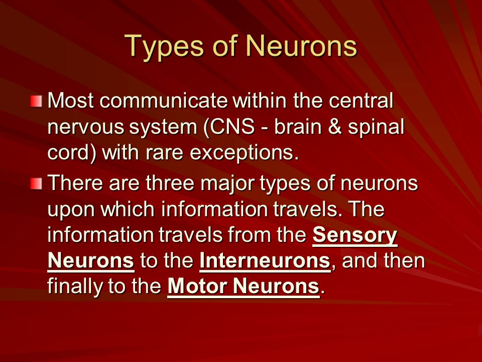Types of Neurons Most communicate within the central nervous system (CNS - brain & spinal cord) with rare exceptions. There are three major types of n