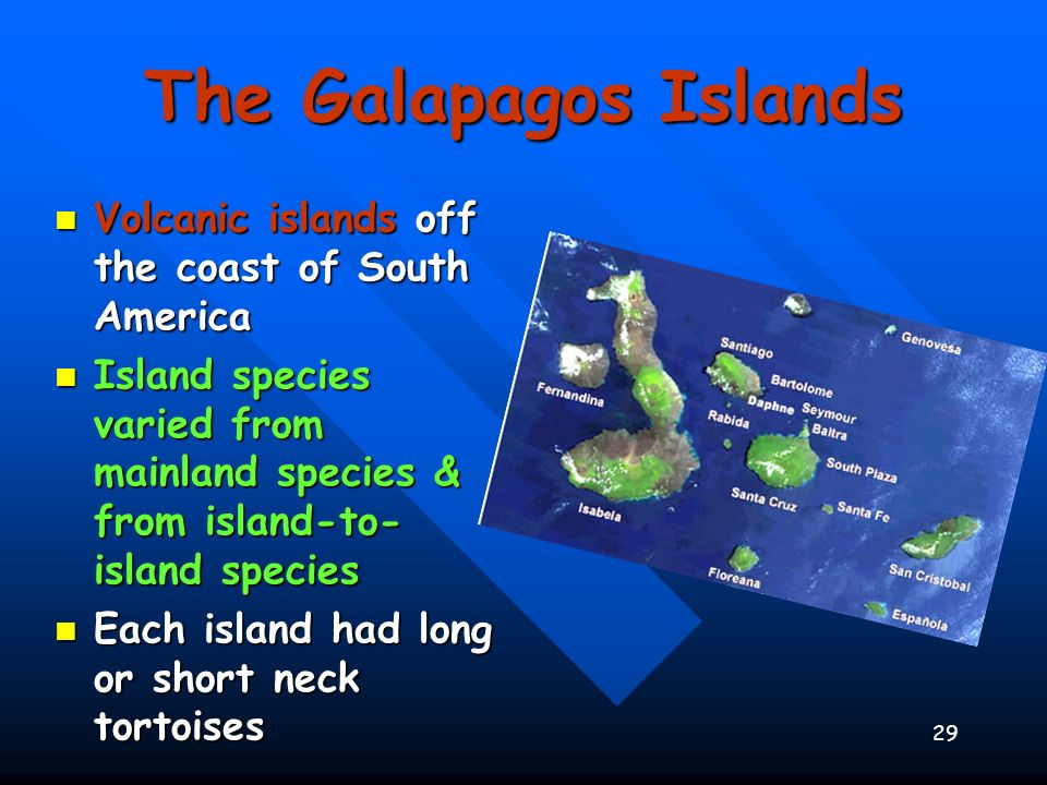 29 The Galapagos Islands Volcanic islands off the coast of South America Volcanic islands off the coast of South America Island species varied from ma