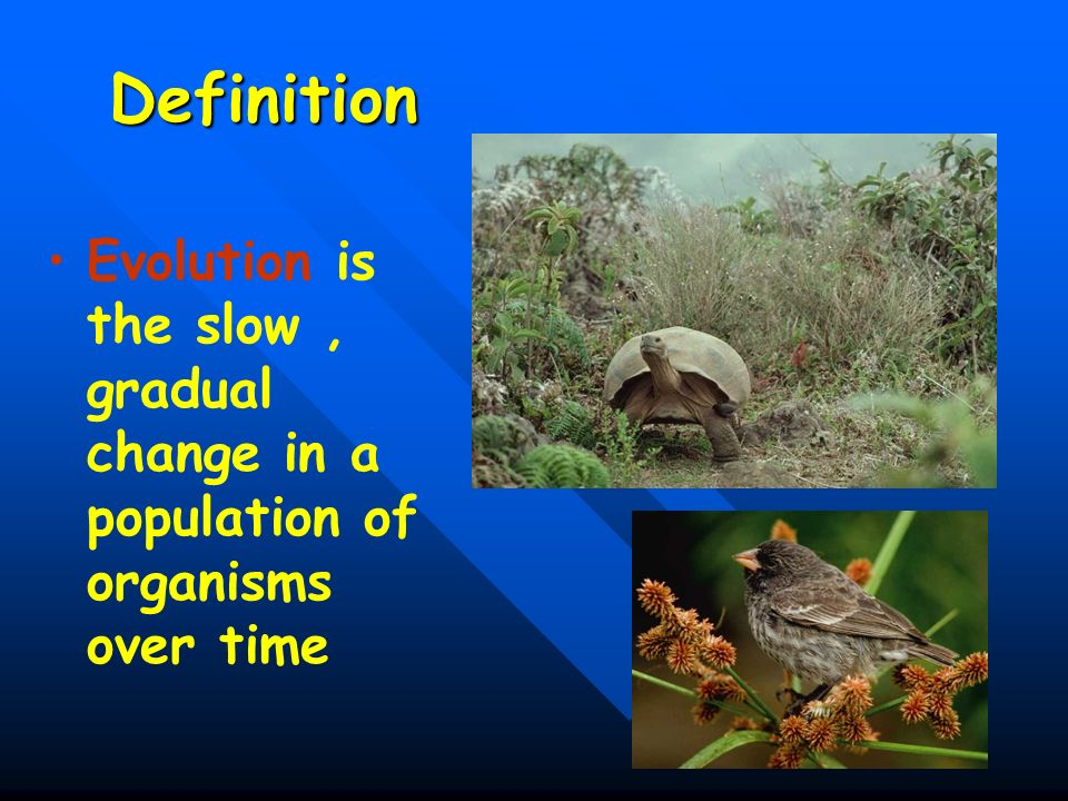 38 Definition Evolution is the slow, gradual change in a population of organisms over time