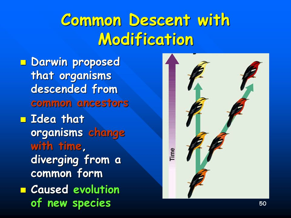50 Common Descent with Modification Darwin proposed that organisms descended from common ancestors Darwin proposed that organisms descended from commo