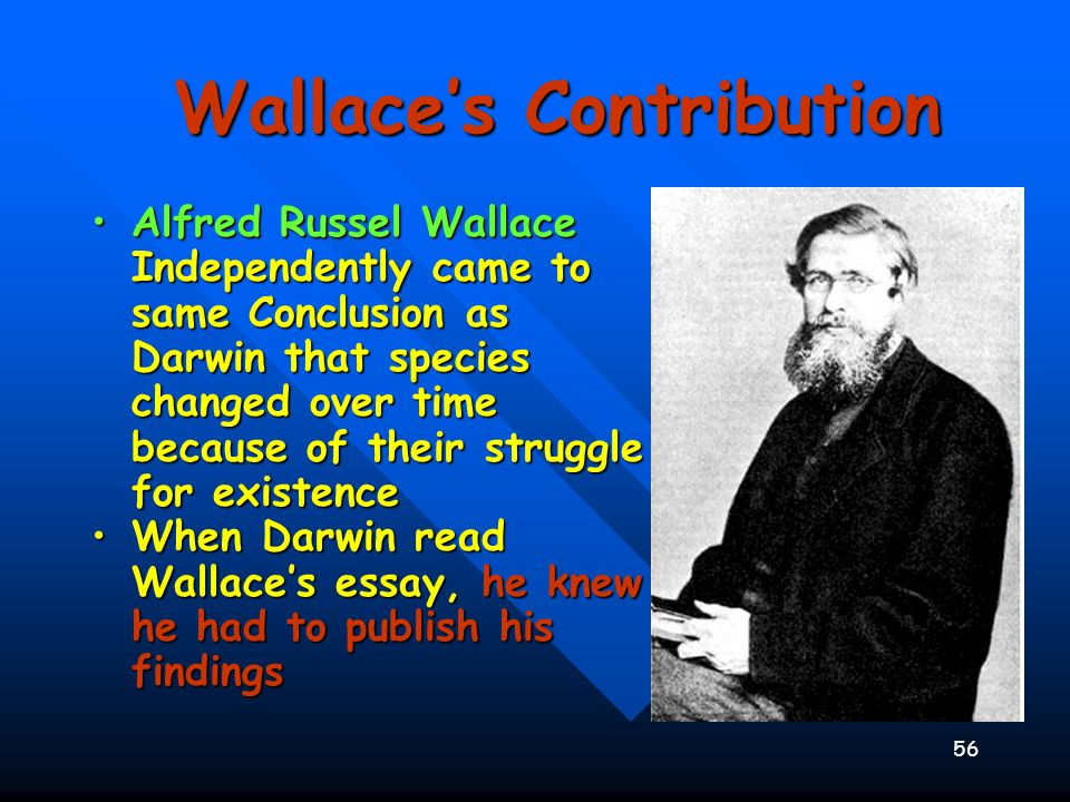 56 Wallaces Contribution Alfred Russel Wallace Independently came to same Conclusion as Darwin that species changed over time because of their struggl