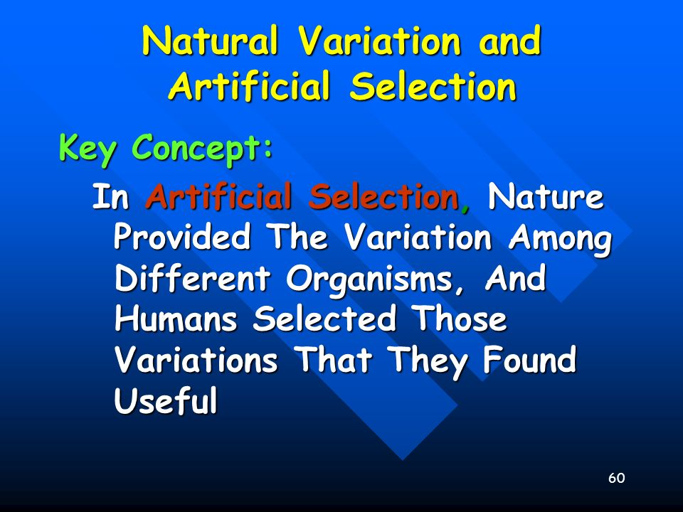 60 Natural Variation and Artificial Selection Key Concept: In Artificial Selection, Nature Provided The Variation Among Different Organisms, And Human