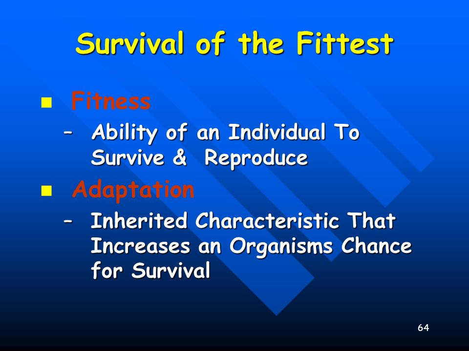 64 Survival of the Fittest Fitness –Ability of an Individual To Survive & Reproduce Adaptation –Inherited Characteristic That Increases an Organisms C