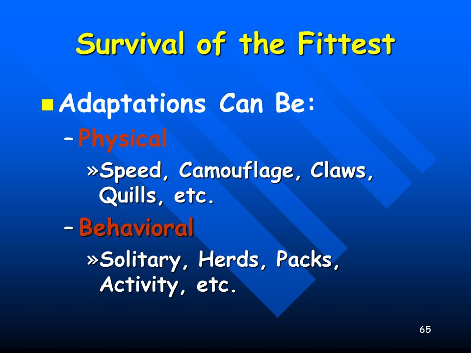 65 Survival of the Fittest Adaptations Can Be: – –Physical »Speed, Camouflage, Claws, Quills, etc. –Behavioral »Solitary, Herds, Packs, Activity, etc.