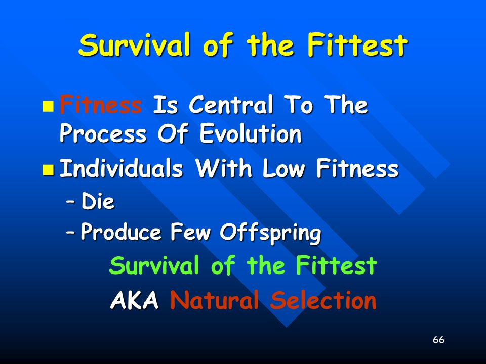 66 Survival of the Fittest Is Central To The Process Of Evolution Fitness Is Central To The Process Of Evolution Individuals With Low Fitness Individu