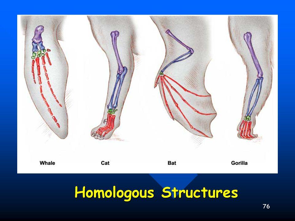 76 Homologous Structures