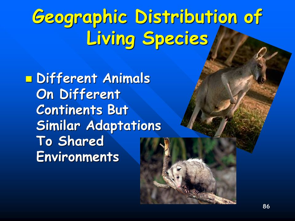 86 Geographic Distribution of Living Species Different Animals On Different Continents But Similar Adaptations To Shared Environments Different Animal