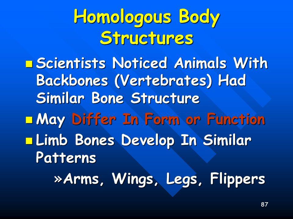 87 Homologous Body Structures Scientists Noticed Animals With Backbones (Vertebrates) Had Similar Bone Structure Scientists Noticed Animals With Backb