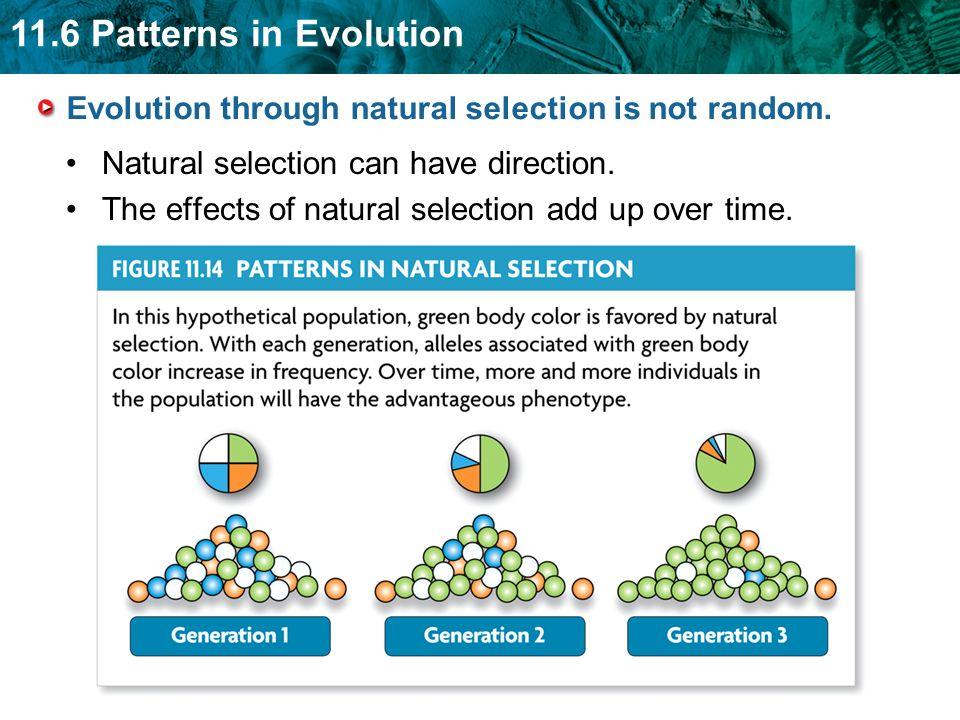 11.6 Patterns in Evolution Convergent evolution describes evolution toward similar traits in unrelated species.