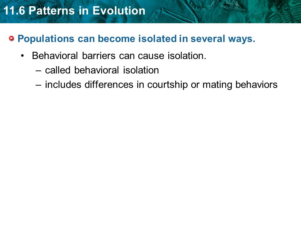 11.6 Patterns in Evolution Populations can become isolated in several ways. Behavioral barriers can cause isolation. –called behavioral isolation –inc