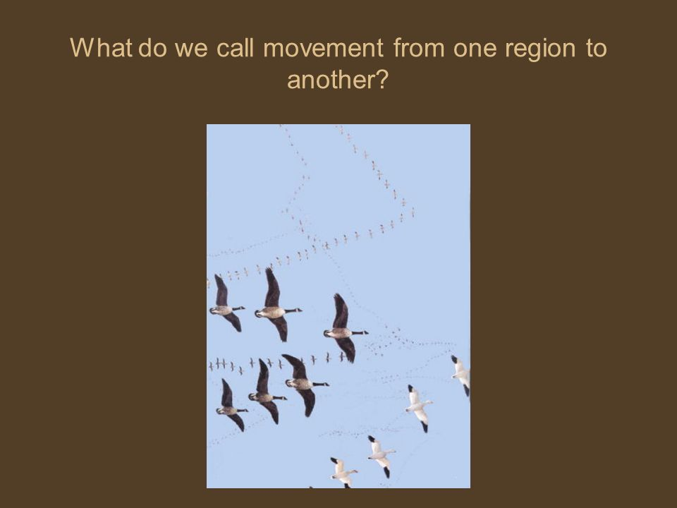 What do we call movement from one region to another?