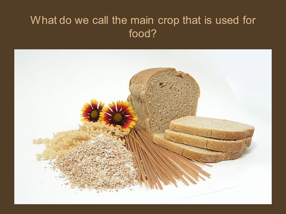 What do we call the main crop that is used for food