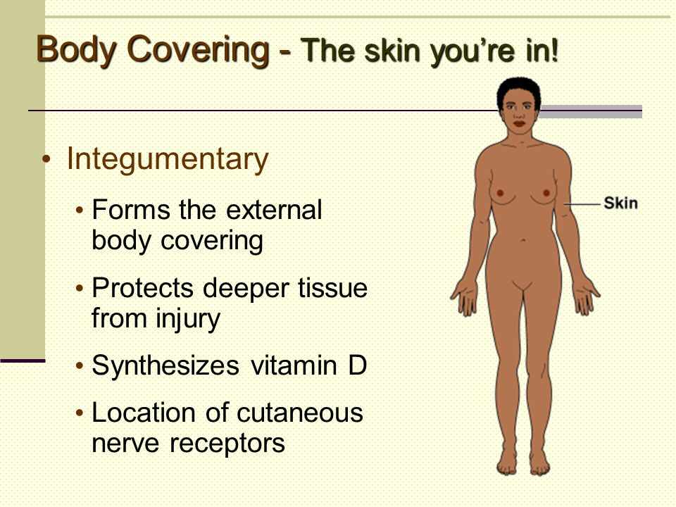 Body Covering - The skin youre in! Integumentary Forms the external body covering Protects deeper tissue from injury Synthesizes vitamin D Location of