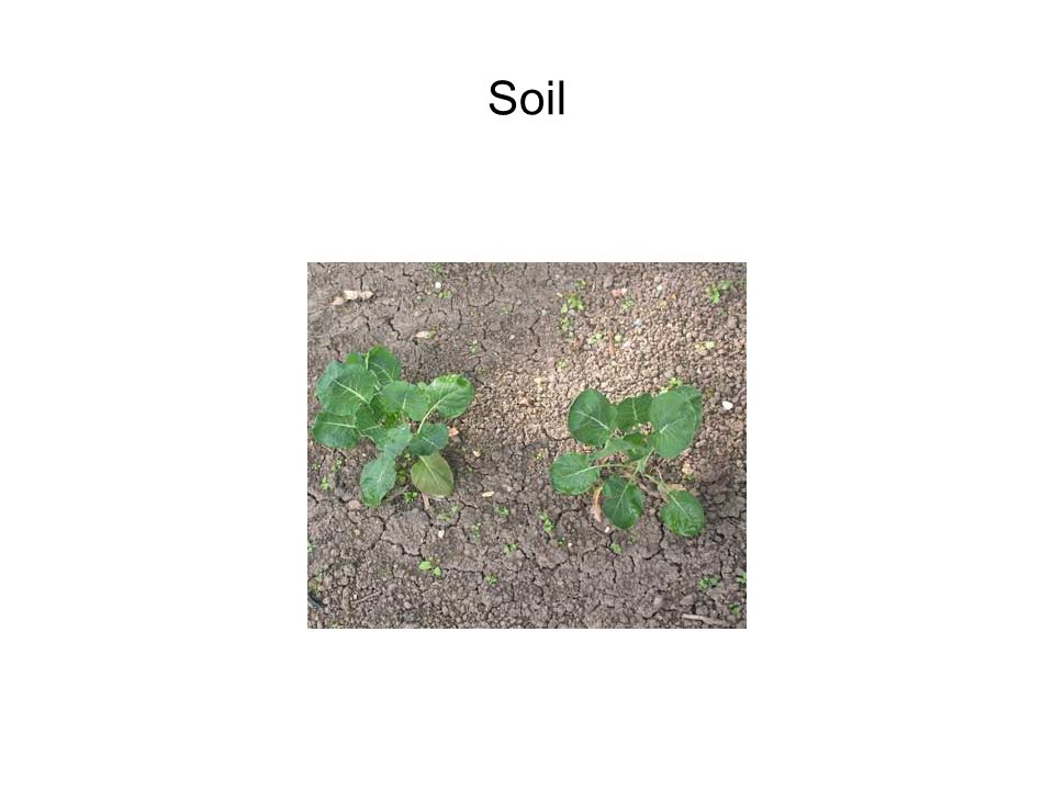 What do we call the top layer of soil.